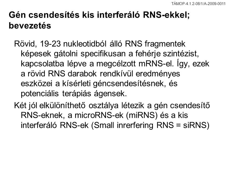 Gén csendesítés kis interferáló RNS-ekkel; bevezetés Rövid, 19-23 nukleotidból álló RNS fragmentek képesek gátolni specifikusan a fehérje szintézist,