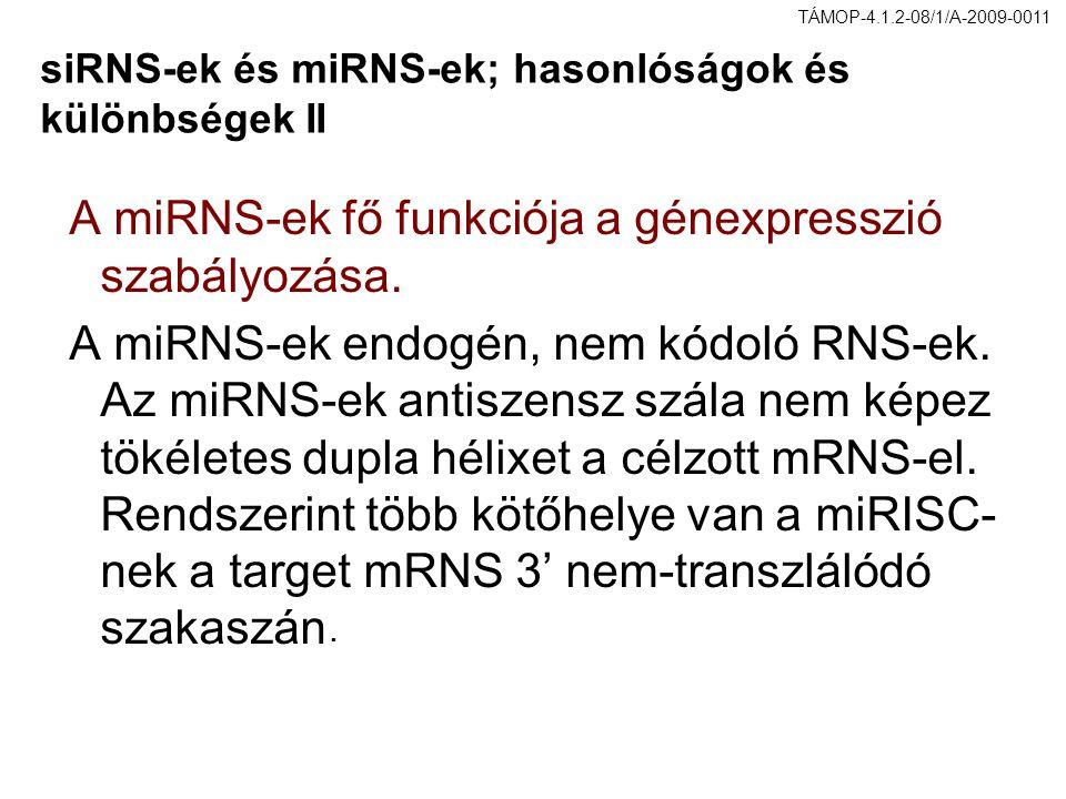 siRNS-ek és miRNS-ek; hasonlóságok és különbségek II A miRNS-ek fő funkciója a génexpresszió szabályozása. A miRNS-ek endogén, nem kódoló RNS-ek. Az m