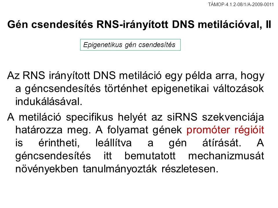 Gén csendesítés RNS-irányított DNS metilációval, II Az RNS irányított DNS metiláció egy példa arra, hogy a géncsendesítés történhet epigenetikai válto