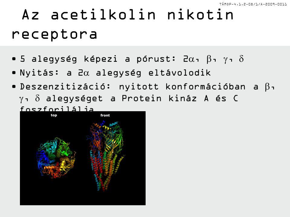 TÁMOP-4.1.2-08/1/A-2009-0011 Neurotranszmitterek NeurotranszmitterHatásReceptor altípusok Acetilkolin (Ach)+/-Nikotin, Muszkarin Norepinefrin (NE)+α1/2, β1/2/3 Dopamin+/-D1-D4 Szerotonin (5-HT)+/-5-HT1 A stb.