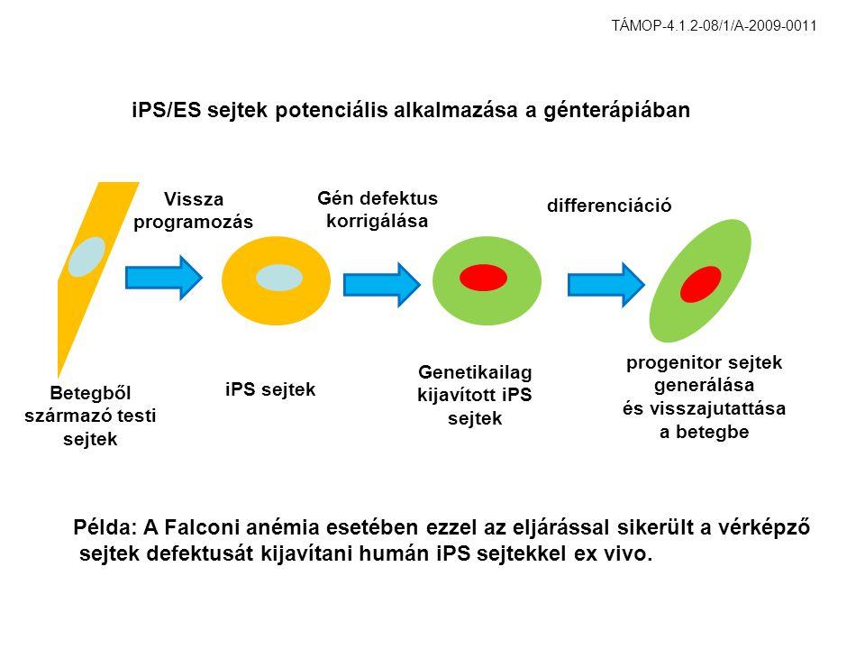 Betegből származó testi sejtek iPS sejtek Genetikailag kijavított iPS sejtek progenitor sejtek generálása és visszajutattása a betegbe iPS/ES sejtek potenciális alkalmazása a génterápiában differenciáció Gén defektus korrigálása Vissza programozás Példa: A Falconi anémia esetében ezzel az eljárással sikerült a vérképző sejtek defektusát kijavítani humán iPS sejtekkel ex vivo.