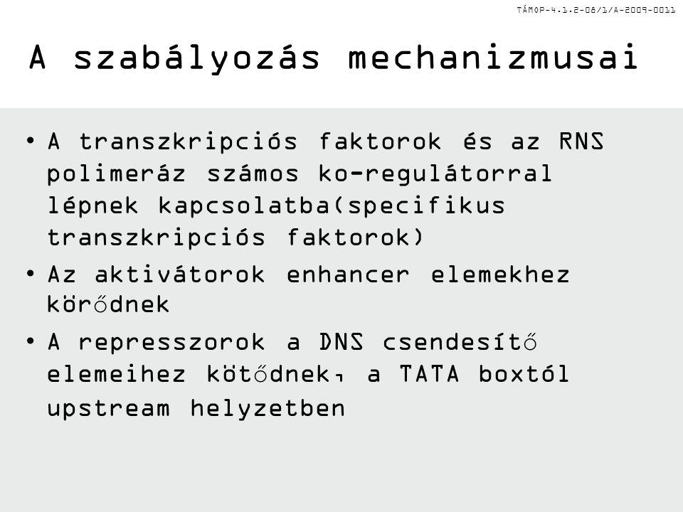 TÁMOP-4.1.2-08/1/A-2009-0011 A szabályozás mechanizmusai A transzkripciós faktorok és az RNS polimeráz számos ko-regulátorral lépnek kapcsolatba(specifikus transzkripciós faktorok) Az aktivátorok enhancer elemekhez körődnek A represszorok a DNS csendesítő elemeihez kötődnek, a TATA boxtól upstream helyzetben