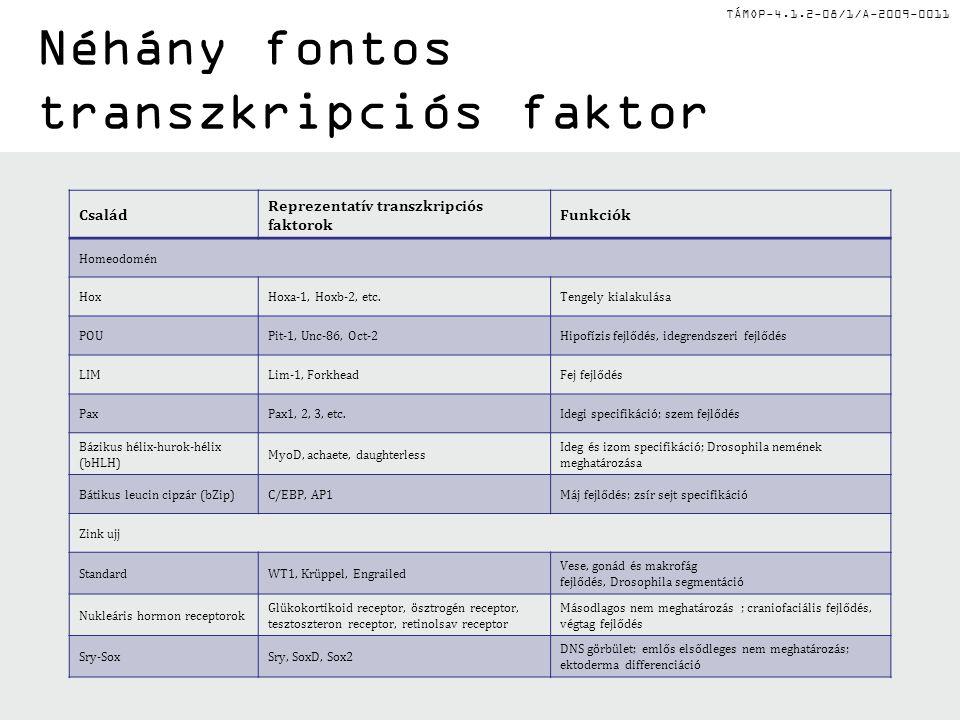 TÁMOP-4.1.2-08/1/A-2009-0011 Néhány fontos transzkripciós faktor Család Reprezentatív transzkripciós faktorok Funkciók Homeodomén HoxHoxa-1, Hoxb-2, etc.Tengely kialakulása POUPit-1, Unc-86, Oct-2Hipofízis fejlődés, idegrendszeri fejlődés LIMLim-1, ForkheadFej fejlődés PaxPax1, 2, 3, etc.Idegi specifikáció; szem fejlődés Bázikus hélix-hurok-hélix (bHLH) MyoD, achaete, daughterless Ideg és izom specifikáció; Drosophila nemének meghatározása Bátikus leucin cipzár (bZip)C/EBP, AP1Máj fejlődés; zsír sejt specifikáció Zink ujj StandardWT1, Krüppel, Engrailed Vese, gonád és makrofág fejlődés, Drosophila segmentáció Nukleáris hormon receptorok Glükokortikoid receptor, ösztrogén receptor, tesztoszteron receptor, retinolsav receptor Másodlagos nem meghatározás ; craniofaciális fejlődés, végtag fejlődés Sry-SoxSry, SoxD, Sox2 DNS görbület; emlős elsődleges nem meghatározás; ektoderma differenciáció