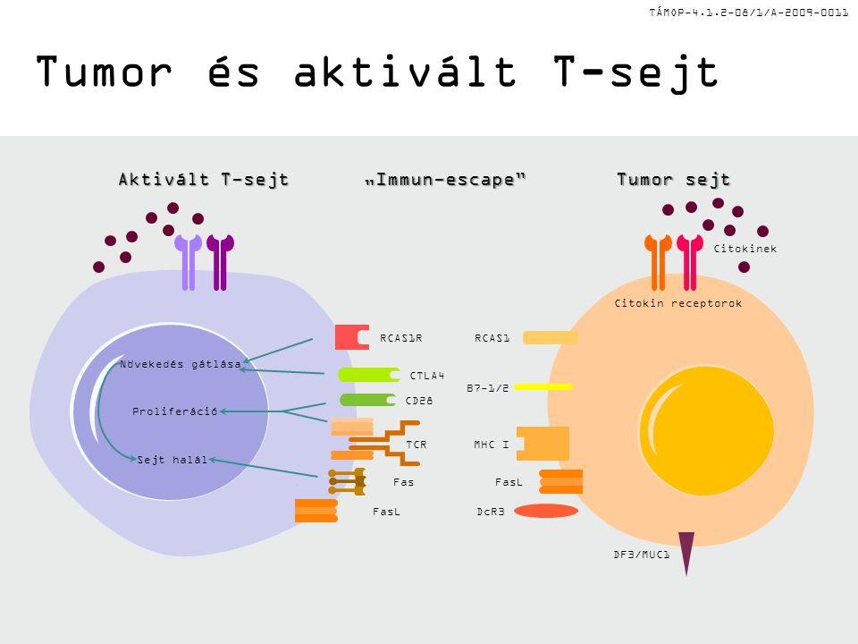 """TÁMOP-4.1.2-08/1/A-2009-0011 Tumor és aktivált T-sejt Aktivált T-sejt """"Immun-escape Tumor sejt DF3/MUC1 CD28 CTLA4 B7-1/2 MHC ITCR Növekedés gátlása Proliferáció Sejt halál RCAS1R Citokin receptorok Citokinek RCAS1 FasLDcR3 FasFasL"""
