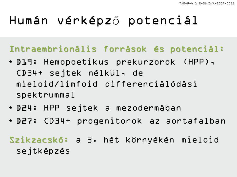 TÁMOP-4.1.2-08/1/A-2009-0011 Humán vérképző potenciál Intraembrionális források és potenciál: D19:D19: Hemopoetikus prekurzorok (HPP), CD34+ sejtek nélkül, de mieloid/limfoid differenciálódási spektrummal D24:D24: HPP sejtek a mezodermában D27:D27: CD34+ progenitorok az aortafalban Szikzacskó: Szikzacskó: a 3.