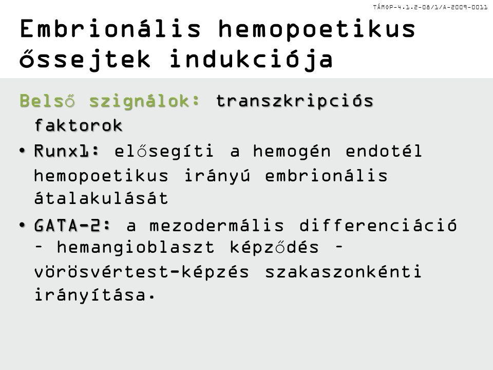 TÁMOP-4.1.2-08/1/A-2009-0011 Embrionális hemopoetikus őssejtek indukciója Belső szignálok:transzkripciós faktorok Belső szignálok: transzkripciós faktorok Runx1:Runx1: elősegíti a hemogén endotél hemopoetikus irányú embrionális átalakulását GATA-2:GATA-2: a mezodermális differenciáció – hemangioblaszt képződés – vörösvértest-képzés szakaszonkénti irányítása.