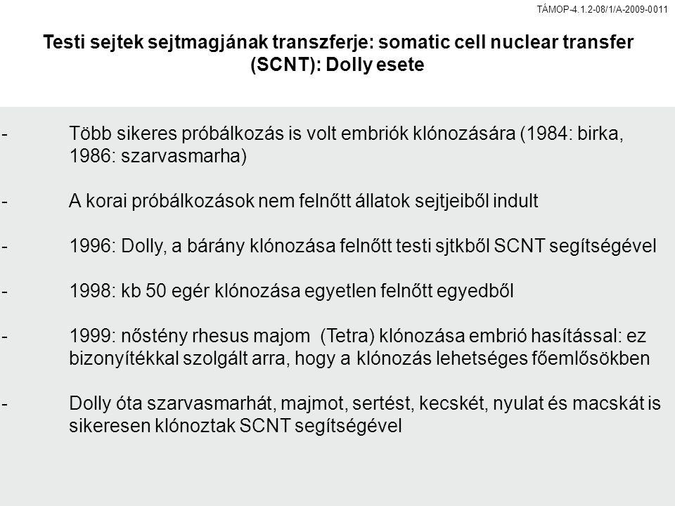 Testi sejtek sejtmagjának transzferje: somatic cell nuclear transfer (SCNT): Dolly esete -Több sikeres próbálkozás is volt embriók klónozására (1984: birka, 1986: szarvasmarha) -A korai próbálkozások nem felnőtt állatok sejtjeiből indult -1996: Dolly, a bárány klónozása felnőtt testi sjtkből SCNT segítségével -1998: kb 50 egér klónozása egyetlen felnőtt egyedből -1999: nőstény rhesus majom (Tetra) klónozása embrió hasítással: ez bizonyítékkal szolgált arra, hogy a klónozás lehetséges főemlősökben -Dolly óta szarvasmarhát, majmot, sertést, kecskét, nyulat és macskát is sikeresen klónoztak SCNT segítségével