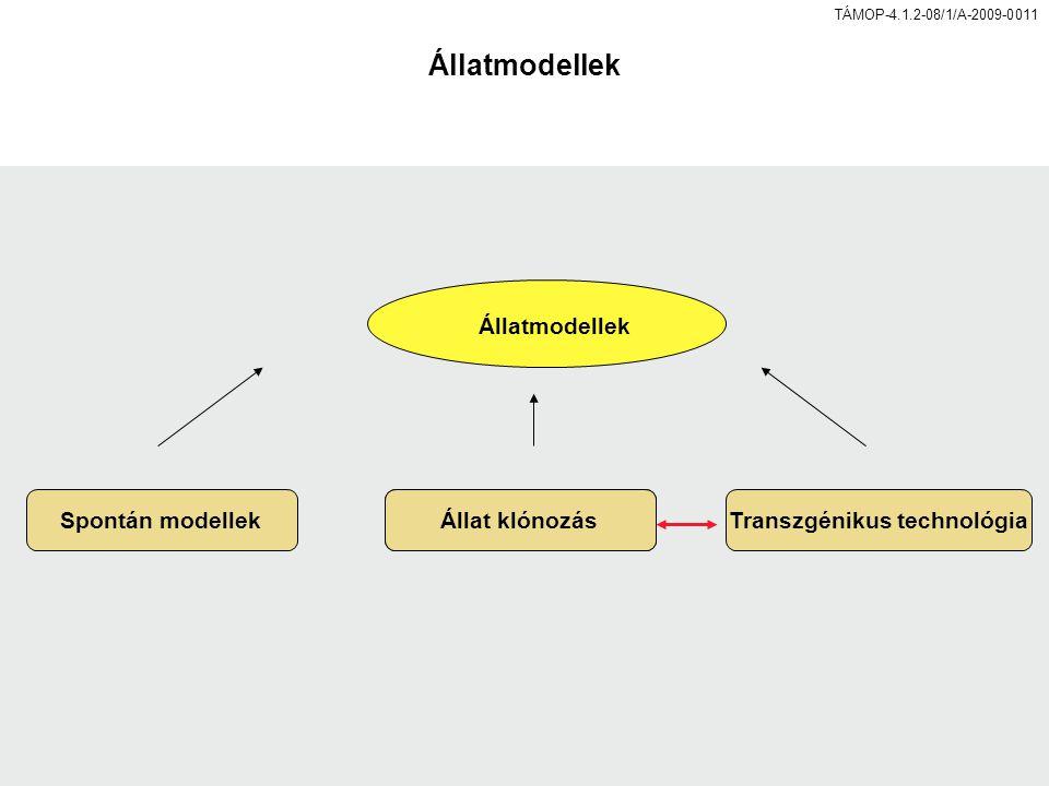 TÁMOP-4.1.2-08/1/A-2009-0011 Állatmodellek Spontán modellekÁllat klónozásTranszgénikus technológia