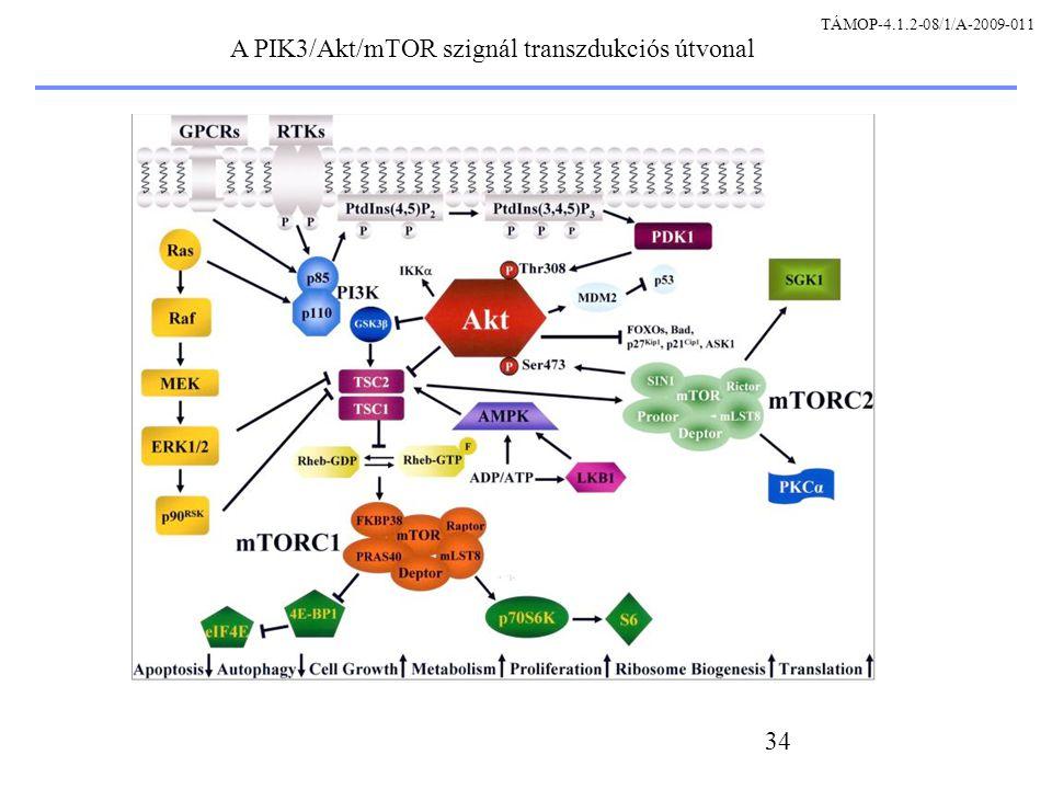 34 A PIK3/Akt/mTOR szignál transzdukciós útvonal TÁMOP-4.1.2-08/1/A-2009-011