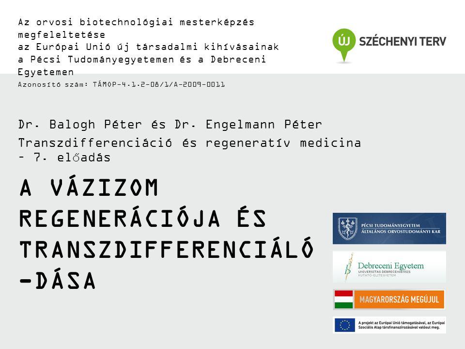 A VÁZIZOM REGENERÁCIÓJA ÉS TRANSZDIFFERENCIÁLÓ -DÁSA Az orvosi biotechnológiai mesterképzés megfeleltetése az Európai Unió új társadalmi kihívásainak a Pécsi Tudományegyetemen és a Debreceni Egyetemen Azonosító szám: TÁMOP-4.1.2-08/1/A-2009-0011 Dr.