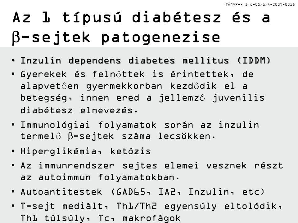 TÁMOP-4.1.2-08/1/A-2009-0011 Az 1 típusú diabétesz és a  -sejtek patogenezise Inzulin dependens diabetes mellitus (IDDM)Inzulin dependens diabetes mellitus (IDDM) Gyerekek és felnőttek is érintettek, de alapvetően gyermekkorban kezdődik el a betegség, innen ered a jellemző juvenilis diabétesz elnevezés.