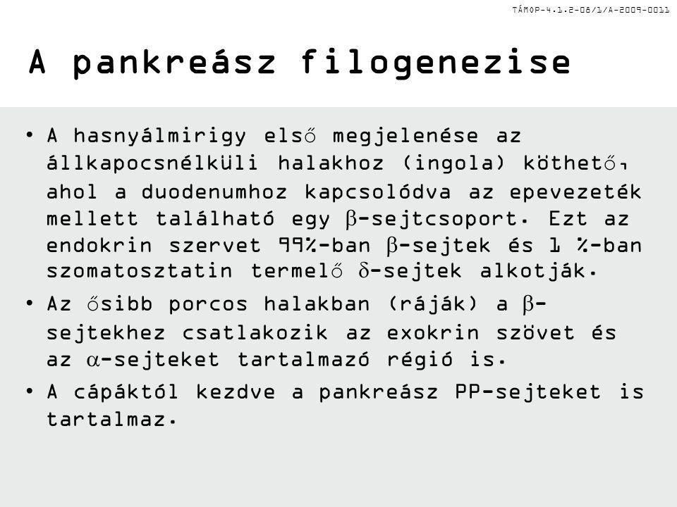 TÁMOP-4.1.2-08/1/A-2009-0011 I.A hasnyálmirigy specifikációja I.
