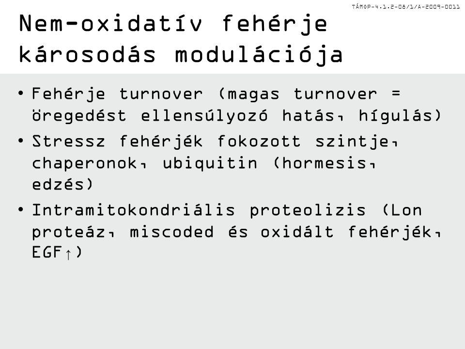 TÁMOP-4.1.2-08/1/A-2009-0011 Fehérje turnover (magas turnover = öregedést ellensúlyozó hatás, hígulás) Stressz fehérjék fokozott szintje, chaperonok,