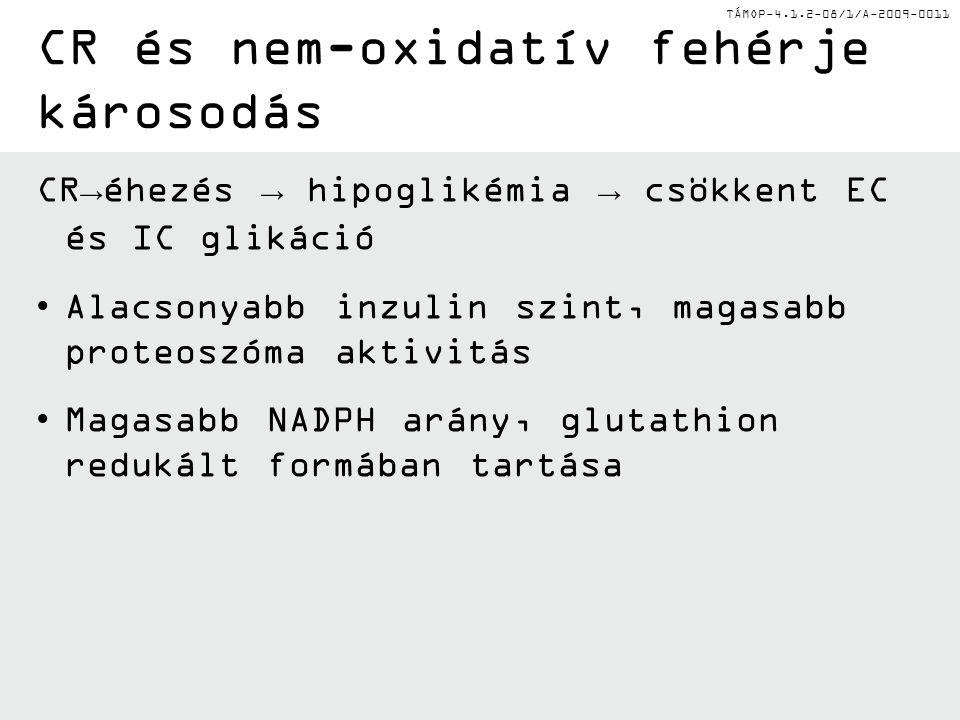 TÁMOP-4.1.2-08/1/A-2009-0011 CR→éhezés → hipoglikémia → csökkent EC és IC glikáció Alacsonyabb inzulin szint, magasabb proteoszóma aktivitás Magasabb