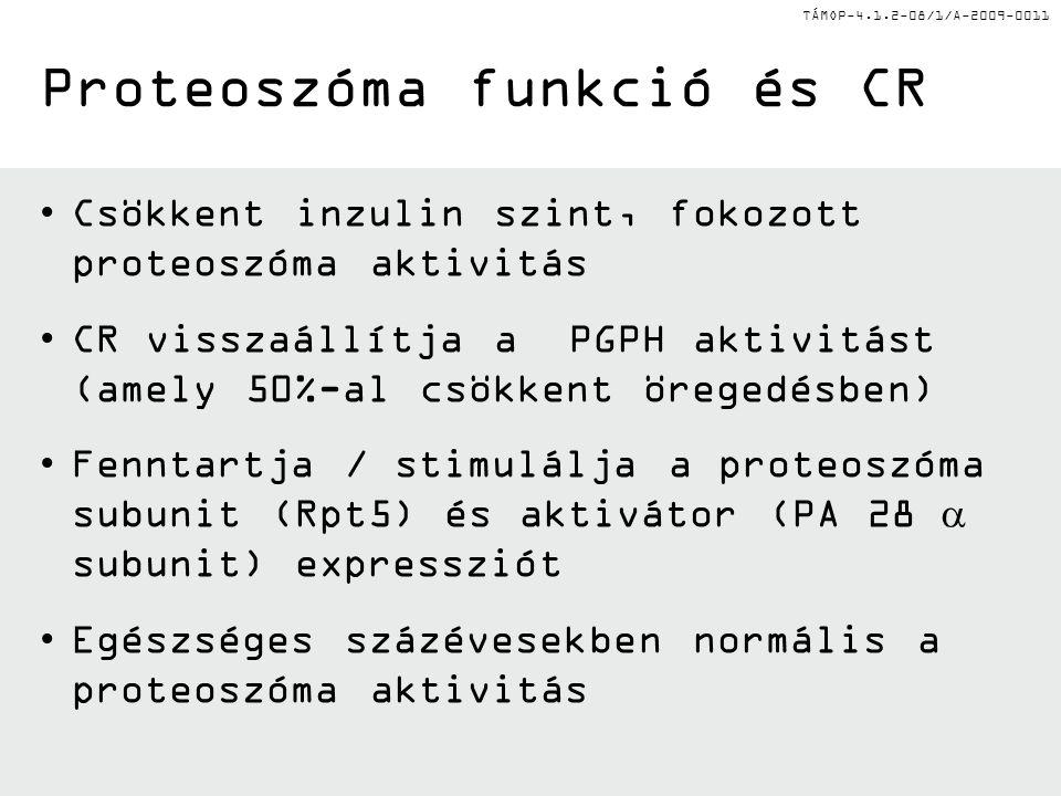 TÁMOP-4.1.2-08/1/A-2009-0011 Csökkent inzulin szint, fokozott proteoszóma aktivitás CR visszaállítja a PGPH aktivitást (amely 50%-al csökkent öregedés