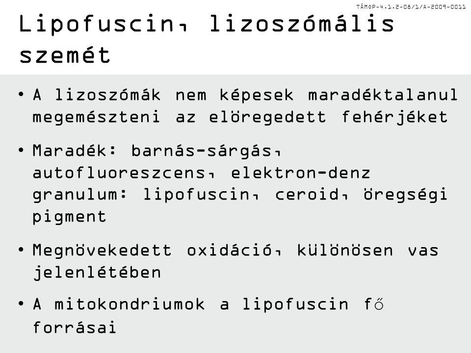 TÁMOP-4.1.2-08/1/A-2009-0011 A lizoszómák nem képesek maradéktalanul megemészteni az elöregedett fehérjéket Maradék: barnás-sárgás, autofluoreszcens,