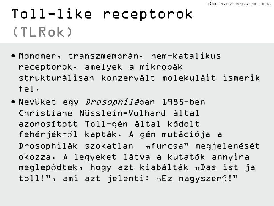 TÁMOP-4.1.2-08/1/A-2009-0011 Toll-like receptorok (TLRok) Monomer, transzmembrán, nem-katalikus receptorok, amelyek a mikrobák strukturálisan konzervált molekuláit ismerik fel.
