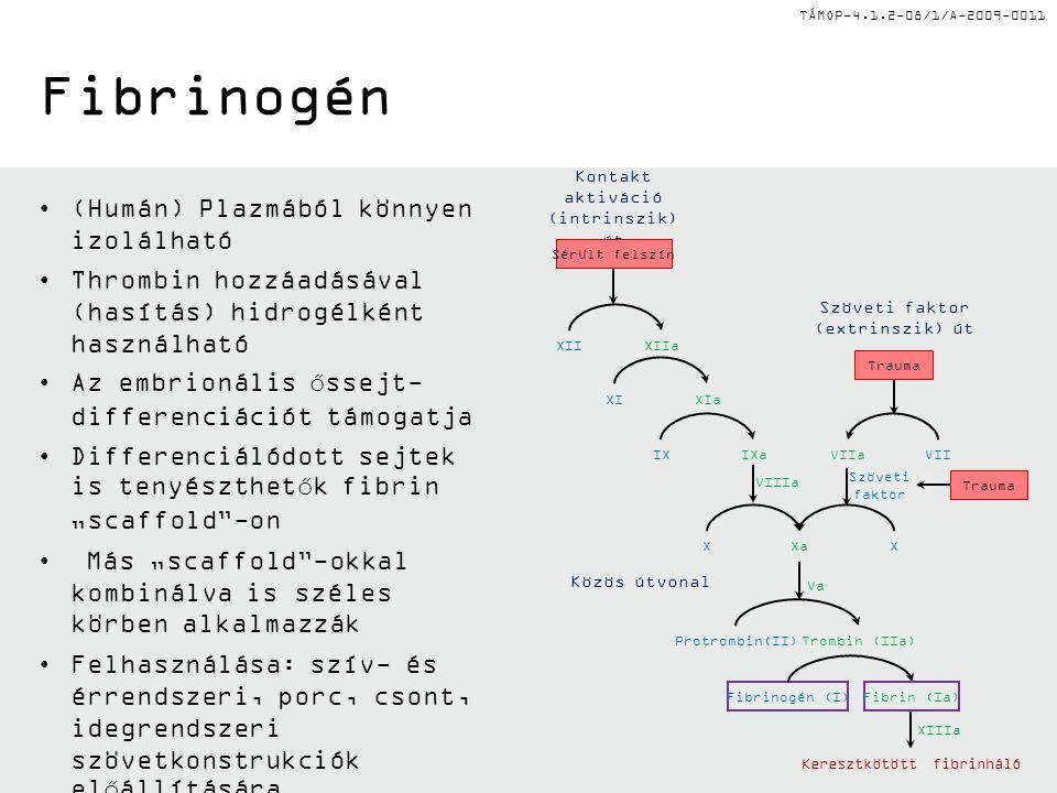 """TÁMOP-4.1.2-08/1/A-2009-0011 Fibrinogén (Humán) Plazmából könnyen izolálható Thrombin hozzáadásával (hasítás) hidrogélként használható Az embrionális őssejt- differenciációt támogatja Differenciálódott sejtek is tenyészthetők fibrin """"scaffold -on Más """"scaffold -okkal kombinálva is széles körben alkalmazzák Felhasználása: szív- és érrendszeri, porc, csont, idegrendszeri szövetkonstrukciók előállítására Szöveti faktor (extrinszik) út Kontakt aktiváció (intrinszik) út Szöveti faktor Közös útvonal Keresztkötött fibrinháló Trauma Va XIIIa XIIXIIa XIXIa IXaIX Trombin (IIa)Protrombin(II) Fibrinogén (I) XXaX VIIaVII VIIIa Fibrin (Ia) Sérült felszín Trauma"""