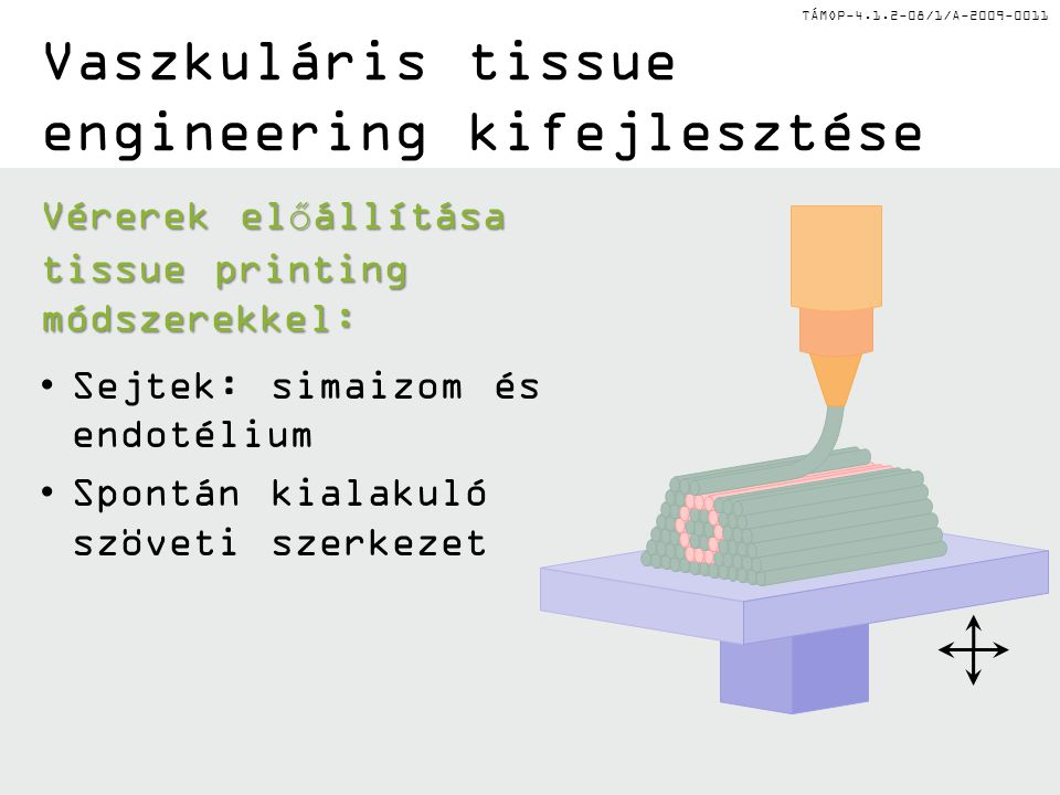 TÁMOP-4.1.2-08/1/A-2009-0011 Vaszkuláris tissue engineering kifejlesztése Vérerek előállítása tissue printing módszerekkel: Sejtek: simaizom és endotélium Spontán kialakuló szöveti szerkezet