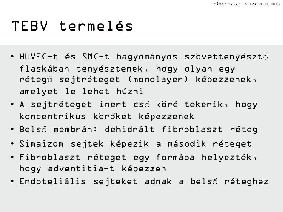 TÁMOP-4.1.2-08/1/A-2009-0011 TEBV termelés HUVEC-t és SMC-t hagyományos szövettenyésztő flaskában tenyésztenek, hogy olyan egy rétegű sejtréteget (monolayer) képezzenek, amelyet le lehet húzni A sejtréteget inert cső köré tekerik, hogy koncentrikus köröket képezzenek Belső membrán: dehidrált fibroblaszt réteg Simaizom sejtek képezik a második réteget Fibroblaszt réteget egy formába helyezték, hogy adventitia-t képezzen Endoteliális sejteket adnak a belső réteghez