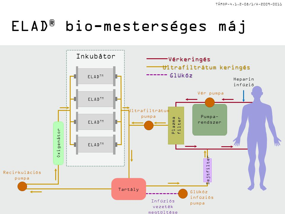 TÁMOP-4.1.2-08/1/A-2009-0011 ELAD ® bio-mesterséges májVérkeringés Ultrafiltrátum keringés Glükóz ELAD TM Plazma filter Oxigenátor Pumpa- rendszer Tartály Vér pumpa Ultrafiltrátum pumpa Recirkulációs pumpa Glükóz infúziós pumpa Infúziós vezeték megtöltése Heparin infúzió Inkubátor Sejtfilter