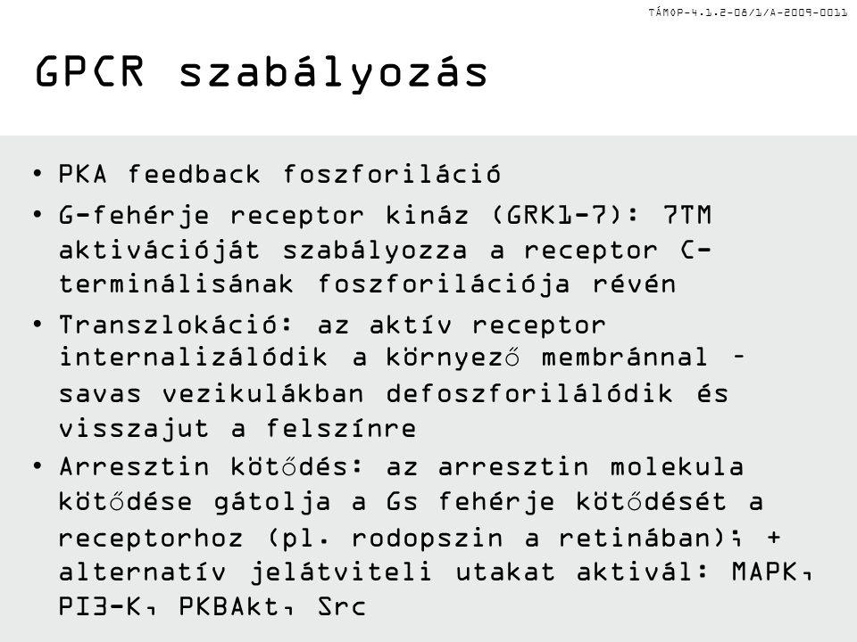 TÁMOP-4.1.2-08/1/A-2009-0011 GPCR szabályozás PKA feedback foszforiláció G-fehérje receptor kináz (GRK1-7): 7TM aktivációját szabályozza a receptor C-
