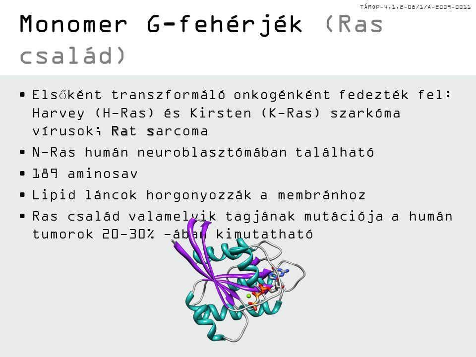 TÁMOP-4.1.2-08/1/A-2009-0011 Monomer G-fehérjék (Ras család) RasElsőként transzformáló onkogénként fedezték fel: Harvey (H-Ras) és Kirsten (K-Ras) sza