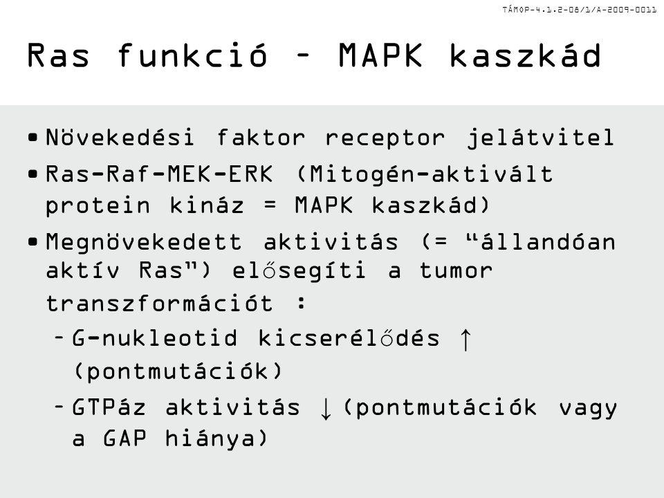 TÁMOP-4.1.2-08/1/A-2009-0011 Ras funkció – MAPK kaszkád Növekedési faktor receptor jelátvitel Ras-Raf-MEK-ERK (Mitogén-aktivált protein kináz = MAPK k