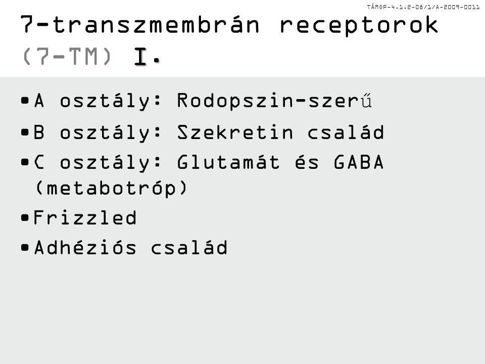 TÁMOP-4.1.2-08/1/A-2009-0011 I. 7-transzmembrán receptorok (7-TM) I. A osztály: Rodopszin-szerű B osztály: Szekretin család C osztály: Glutamát és GAB