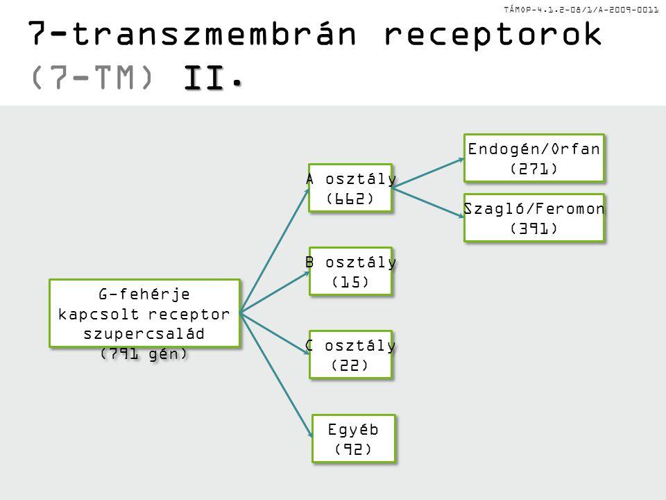 TÁMOP-4.1.2-08/1/A-2009-0011 7-TM ligandok A osztály Bosztály Cosztály Frizzled Adhéziós Prosztaglandi nok GlukagonGlutamátWnt Kondroitin- szulfát TromboxánGnRHGABAHedgehog SzerotoninPTHÉdes ÍzKeserű íz DopaminCRHSzekretin Hisztamin Katekolaminok Acetilkolin (M) Rodopszin Melatonin Kemokinek Bradikinin Szomatosztati n Opioid Vazopresszin