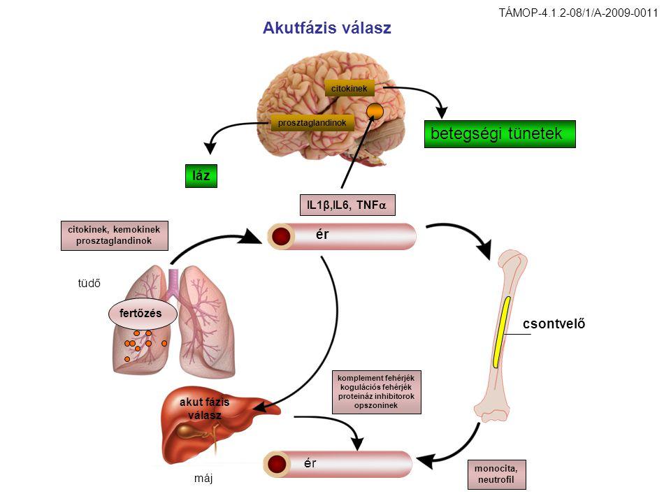 Akutfázis válasz ér csontvelő prosztaglandinok citokinek láz betegségi tünetek IL1β,IL6, TNF  fertőzés citokinek, kemokinek prosztaglandinok akut fáz