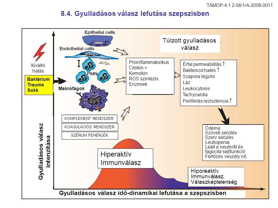 8.4. Gyulladásos válasz lefutása szepszisben Proinflammatorikus Citokin + Kemokin ROS szintézis Enzimek Túlzott gyulladásos válasz Érfal permeabilitás