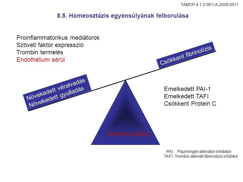 Növekedett véralvadás Növekedett gyulladás Csökkent fibrinolízis Proinflammatorikus mediátorok Szöveti faktor expresszió Trombin termelés Endothélium
