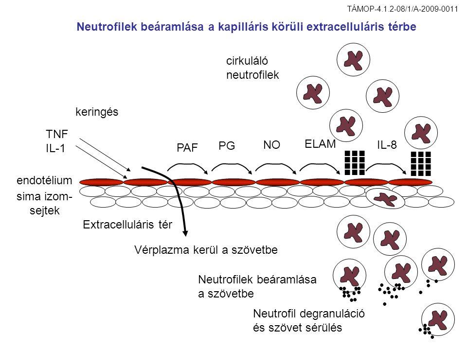 Akutfázis válasz ér csontvelő prosztaglandinok citokinek láz betegségi tünetek IL1β,IL6, TNF  fertőzés citokinek, kemokinek prosztaglandinok akut fázis válasz monocita, neutrofil komplement fehérjék kogulációs fehérjék proteináz inhibitorok opszoninek tüdő máj TÁMOP-4.1.2-08/1/A-2009-0011