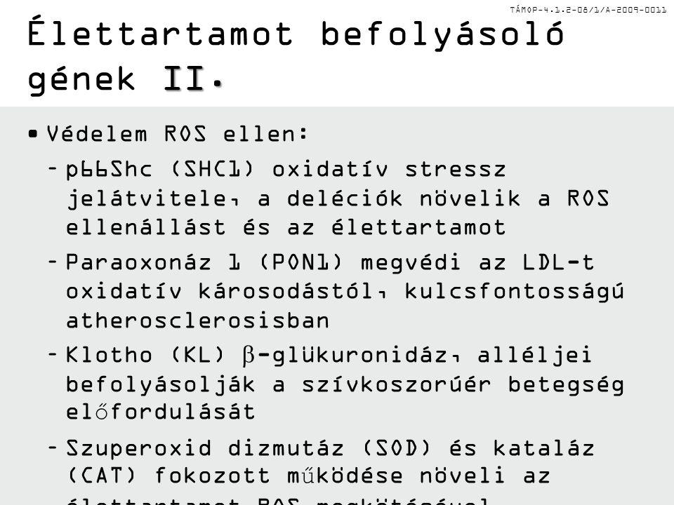 TÁMOP-4.1.2-08/1/A-2009-0011 Védelem ROS ellen: –p66Shc (SHC1) oxidatív stressz jelátvitele, a deléciók növelik a ROS ellenállást és az élettartamot –Paraoxonáz 1 (PON1) megvédi az LDL-t oxidatív károsodástól, kulcsfontosságú atherosclerosisban –Klotho (KL)  -glükuronidáz, alléljei befolyásolják a szívkoszorúér betegség előfordulását –Szuperoxid dizmutáz (SOD) és kataláz (CAT) fokozott működése növeli az élettartamot ROS megkötésével –A hemokromatosis gén (HFE) alléljai befolyásolják a ROS károsodást Fenton reakción keresztül II.