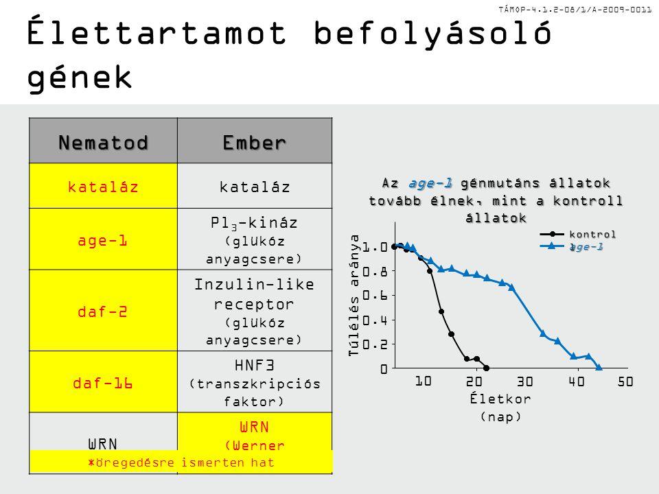 TÁMOP-4.1.2-08/1/A-2009-0011NematodEmber kataláz age-1 Pl 3 -kináz (glükóz anyagcsere) daf-2 Inzulin-like receptor (glükóz anyagcsere) daf-16 HNF3 (transzkripciós faktor) WRN WRN (Werner szindróma) *öregedésre ismerten hat 1.0 0.8 0.6 0.4 0.2 0 Az age-1 génmutáns állatok tovább élnek, mint a kontroll állatok Túlélés aránya Életkor (nap) 10 20 30 40 50 kontrol l age-1 Élettartamot befolyásoló gének