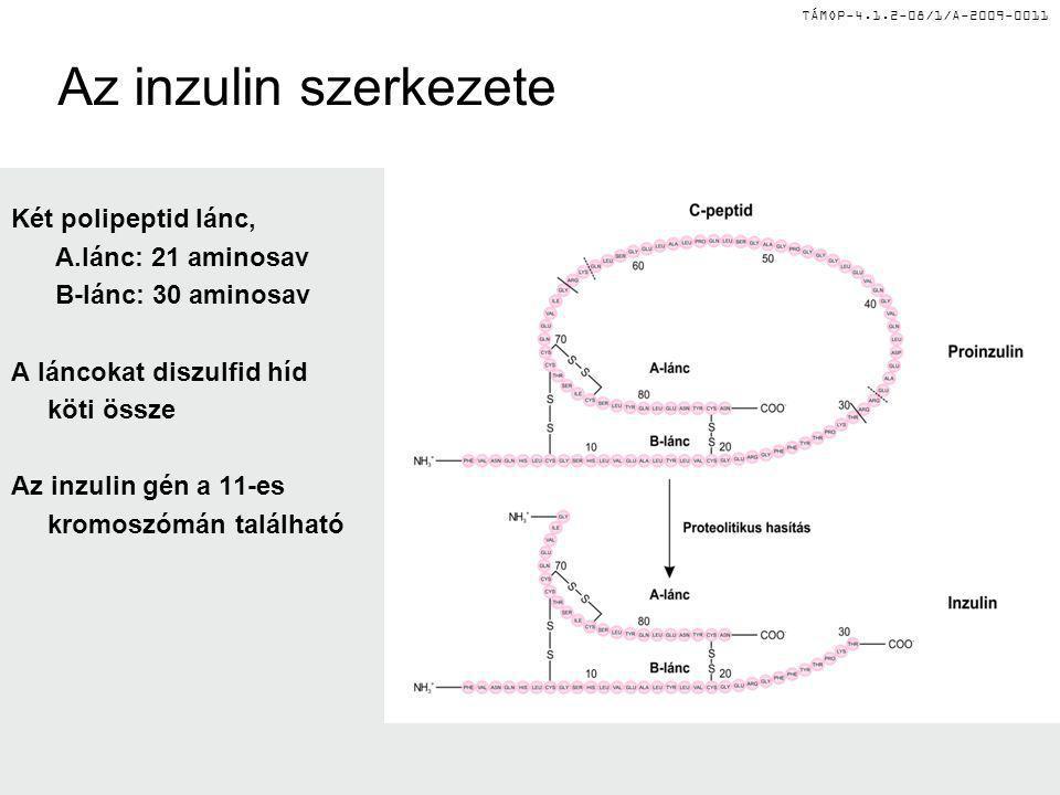 TÁMOP-4.1.2-08/1/A-2009-0011 Az inzulin szerkezete Két polipeptid lánc, A.lánc: 21 aminosav B-lánc: 30 aminosav A láncokat diszulfid híd köti össze Az
