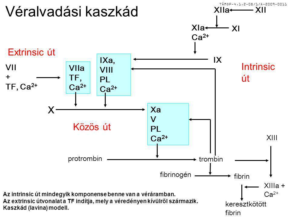 TÁMOP-4.1.2-08/1/A-2009-0011 Véralvadási kaszkád Az intrinsic út mindegyik komponense benne van a véráramban. Az extrinsic útvonalat a TF indítja, mel