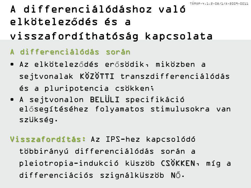 TÁMOP-4.1.2-08/1/A-2009-0011 A pluripotencia kialakítása és érési sorrend Ektoderma Mezoderma Endoderma Pluripotens sejt Ektoderma progenitor Neuronális progenitor Érett neuron Pluripotens sejt