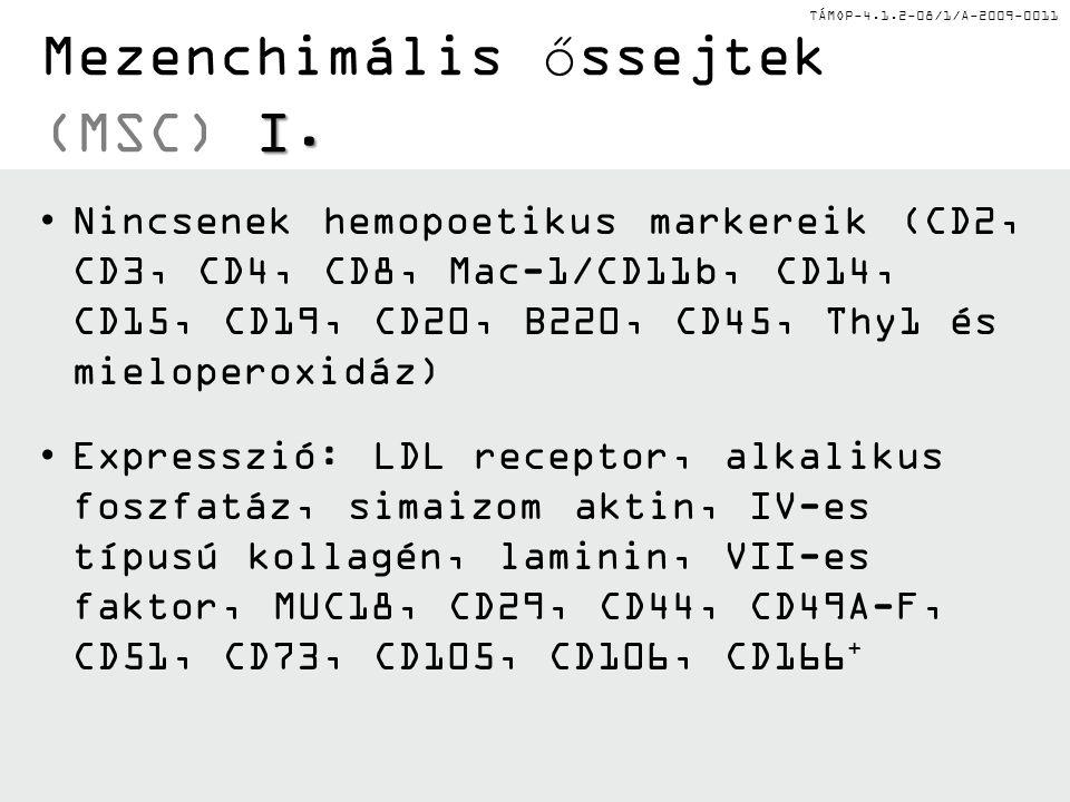 TÁMOP-4.1.2-08/1/A-2009-0011 III. Hemopoetikus őssejtek (HSC) III. Humán hemopoézis Multipotens hemopoetikus őssejt (Hemocitoblaszt) Mieloblaszt Közös
