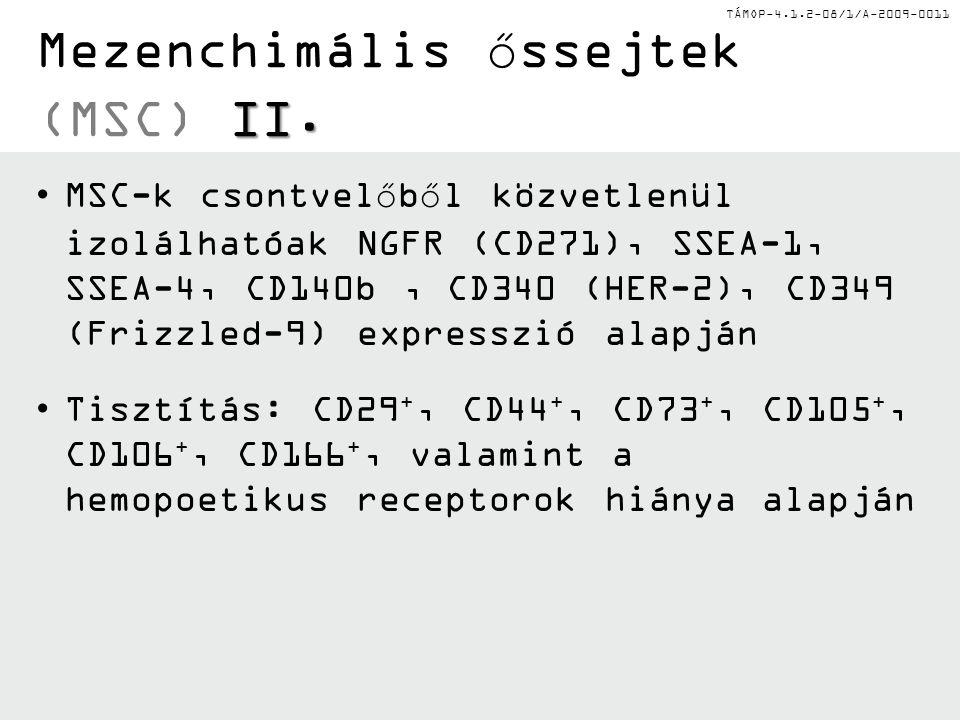 TÁMOP-4.1.2-08/1/A-2009-0011 I. Mezenchimális őssejtek (MSC) I. Nincsenek hemopoetikus markereik (CD2, CD3, CD4, CD8, Mac-1/CD11b, CD14, CD15, CD19, C