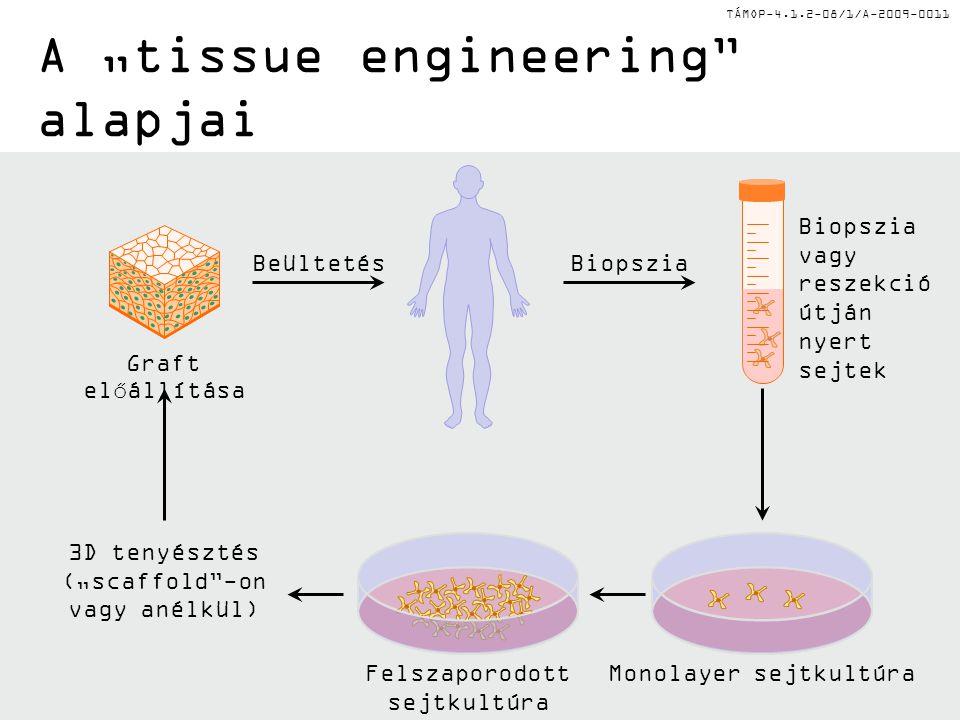 """TÁMOP-4.1.2-08/1/A-2009-0011 A """"tissue engineering alapjai Monolayer sejtkultúraFelszaporodott sejtkultúra Graft előállítása Biopszia vagy reszekció útján nyert sejtek BeültetésBiopszia 3D tenyésztés (""""scaffold -on vagy anélkül)"""