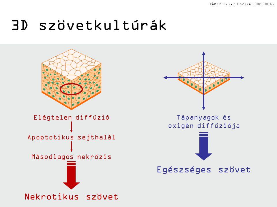 TÁMOP-4.1.2-08/1/A-2009-0011 3D szövetkultúrák Elégtelen diffúzió Apoptotikus sejthalál Másodlagos nekrózis Nekrotikus szövet Tápanyagok és oxigén diffúziója Egészséges szövet