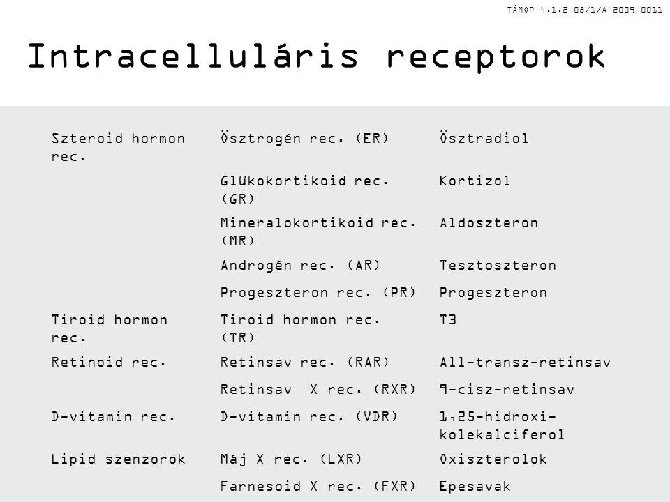 TÁMOP-4.1.2-08/1/A-2009-0011 Intracelluláris receptorok Szteroid hormon rec.