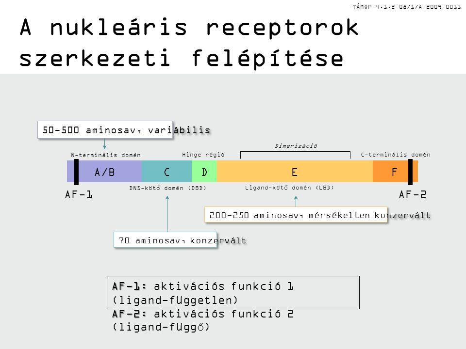TÁMOP-4.1.2-08/1/A-2009-0011 A nukleáris receptorok szerkezeti felépítése AF-1: AF-1: aktivációs funkció 1 (ligand-független) AF-2: AF-2: aktivációs funkció 2 (ligand-függő) AF-1AF-2 A/BCEFD N-terminális domén Hinge régióC-terminális domén DNS-kötő domén (DBD) Ligand-kötő domén (LBD) Dimerizáció 200-250 aminosav, mérsékelten konzervált 50-500 aminosav, variábilis 70 aminosav, konzervált