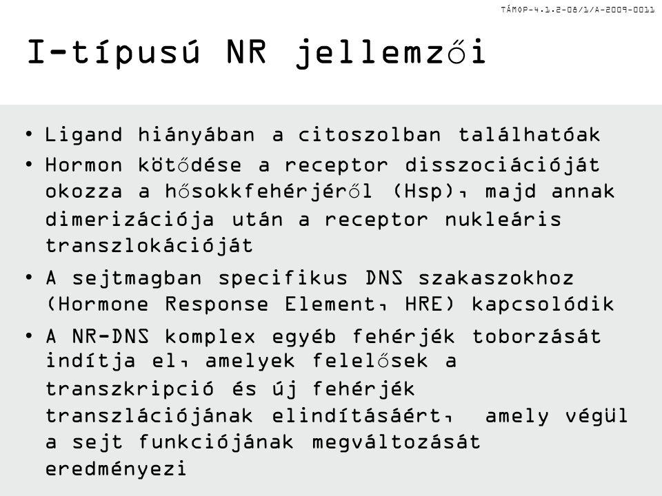 TÁMOP-4.1.2-08/1/A-2009-0011 I-típusú NR jellemzői Ligand hiányában a citoszolban találhatóak Hormon kötődése a receptor disszociációját okozza a hősokkfehérjéről (Hsp), majd annak dimerizációja után a receptor nukleáris transzlokációját A sejtmagban specifikus DNS szakaszokhoz (Hormone Response Element, HRE) kapcsolódik A NR-DNS komplex egyéb fehérjék toborzását indítja el, amelyek felelősek a transzkripció és új fehérjék transzlációjának elindításáért, amely végül a sejt funkciójának megváltozását eredményezi