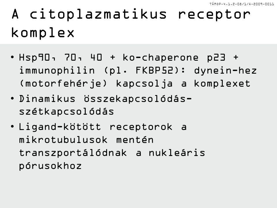 TÁMOP-4.1.2-08/1/A-2009-0011 A citoplazmatikus receptor komplex Hsp90, 70, 40 + ko-chaperone p23 + immunophilin (pl.