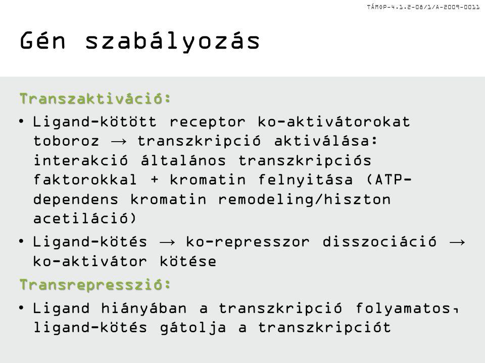 TÁMOP-4.1.2-08/1/A-2009-0011 Gén szabályozás Transzaktiváció: Ligand-kötött receptor ko-aktivátorokat toboroz → transzkripció aktiválása: interakció általános transzkripciós faktorokkal + kromatin felnyitása (ATP- dependens kromatin remodeling/hiszton acetiláció) Ligand-kötés → ko-represszor disszociáció → ko-aktivátor kötése Transrepresszió: Ligand hiányában a transzkripció folyamatos, ligand-kötés gátolja a transzkripciót