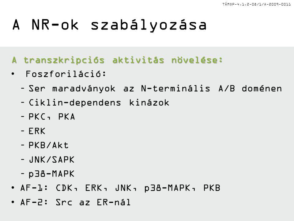 TÁMOP-4.1.2-08/1/A-2009-0011 A NR-ok szabályozása A transzkripciós aktivitás növelése: Foszforiláció: –Ser maradványok az N-terminális A/B doménen –Ciklin-dependens kinázok –PKC, PKA –ERK –PKB/Akt –JNK/SAPK –p38-MAPK AF-1: CDK, ERK, JNK, p38-MAPK, PKB AF-2: Src az ER-nál