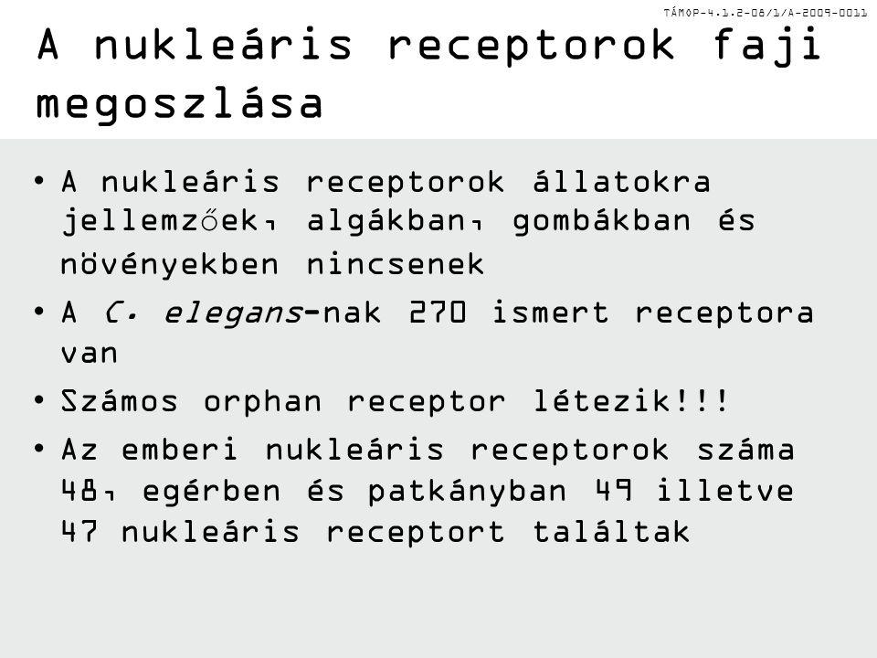 TÁMOP-4.1.2-08/1/A-2009-0011 A nukleáris receptorok faji megoszlása A nukleáris receptorok állatokra jellemzőek, algákban, gombákban és növényekben nincsenek A C.